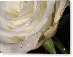 Acrylic Print featuring the photograph Purity by Shirley Mitchell