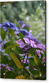 Purple And Green Acrylic Print