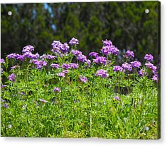 Purple And Green Acrylic Print by Rebecca Cearley