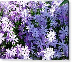 Acrylic Print featuring the photograph Purple Bed by Thanh Tran