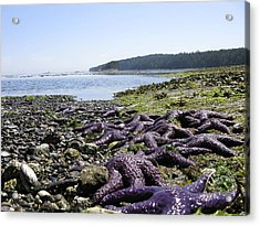 Acrylic Print featuring the photograph Purple by Brian Sereda