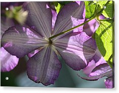 Acrylic Print featuring the photograph Purple Clematis Rear by Peg Toliver