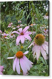 Purple Coneflowers Acrylic Print by Vonda Lawson-Rosa