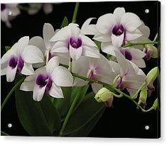 Purple Dendrobium Stem Acrylic Print by Andrea Drake