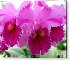 Acrylic Print featuring the photograph Purple Explosion by Debbie Hart