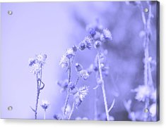 Purple Field Acrylic Print