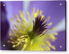 Purple Flower Center Acrylic Print by Mark J Seefeldt