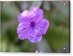 Purple Flower Acrylic Print by Jeanne Andrews