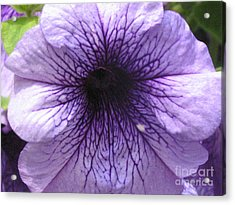 Purple Flower Acrylic Print by Portia Petty