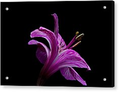 Purple Flower Acrylic Print by Ron Smith