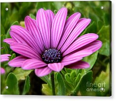 Purple Flower Acrylic Print by Sara  Mayer