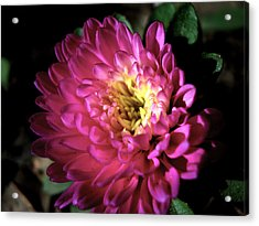 Purple Flower Acrylic Print by Sumit Mehndiratta