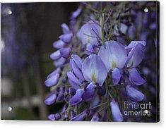 Purple Flowers Acrylic Print by Allen Jiang