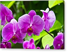 Purple Flowers In A Bunch Acrylic Print