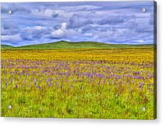 Purple Flowers On The Prairie Photograph By Jen Tenbarge