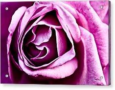 Purple Folds Acrylic Print by Christopher Holmes