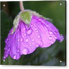Purple Geranium Detail Acrylic Print