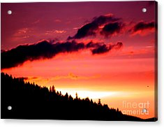 Purple Haze Acrylic Print by Nick Gustafson