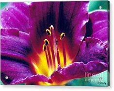Purple Heat Acrylic Print