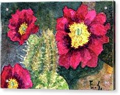 Purple Hedgehog Cactus Acrylic Print