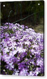 Acrylic Print featuring the photograph Purple Horizon by Thanh Tran
