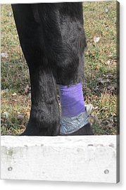 Purple Horse Acrylic Print by Todd Sherlock