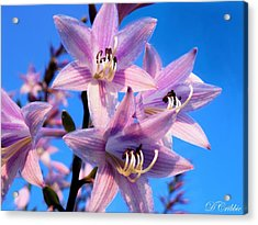 Acrylic Print featuring the photograph Purple Hosta Blooms by Davandra Cribbie