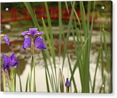 Acrylic Print featuring the photograph Purple Iris by Coby Cooper