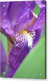 Acrylic Print featuring the photograph Purple Iris by JD Grimes