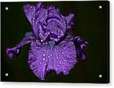 Purple Iris With Water Drops Acrylic Print