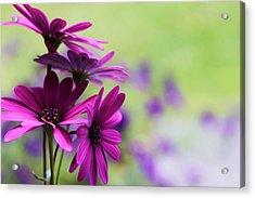 Purple Love Acrylic Print by Penny Haviland