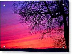 Purple Majesty Acrylic Print by Brenda Becker