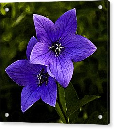 Purple Acrylic Print by Michael Friedman