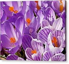 Purple Oh Purple Acrylic Print