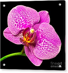 Acrylic Print featuring the photograph Purple Orchid Bloom by Michael Waters