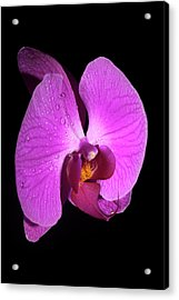 Purple Orchid Acrylic Print by Nick  Shirghio