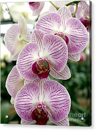 Acrylic Print featuring the photograph Purple Orchids by Debbie Hart