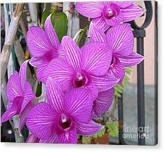 Purple Orchids Acrylic Print by Merton Allen