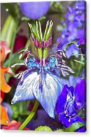 Acrylic Print featuring the photograph Purple Passion by Eve Spring
