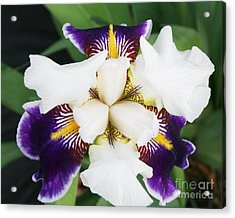 Acrylic Print featuring the photograph Purple Passion by Michael Waters