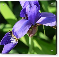 Acrylic Print featuring the photograph Purple Passion by Tanya Tanski