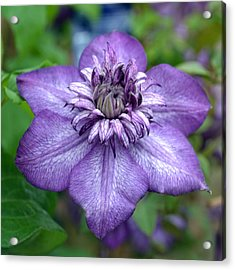 Purple Perfection. Acrylic Print by Terence Davis