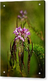 Acrylic Print featuring the photograph Purple Pizzazz by Vicki Pelham