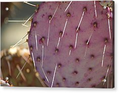 Purple Prickly Pear Acrylic Print