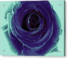 Acrylic Print featuring the photograph Purple Rose by Jasna Gopic