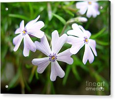 Acrylic Print featuring the photograph Purple Set by Thanh Tran