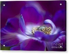 Purple Spring Acrylic Print by Jacky Parker