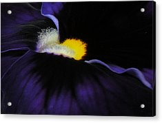 Acrylic Print featuring the photograph Purple Viola Abstract by Deborah Smith