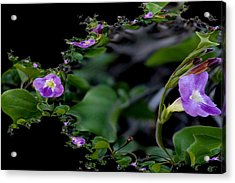 Purple Vitex 2 Acrylic Print by Elizabeth  Doran