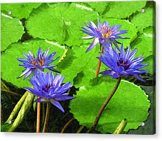 Purple Water Lilies Acrylic Print by Design Windmill